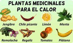 Cómo curar la insuficiencia renal – Botanical-online Cantaloupe, Medicine, Fruit, Diabetes, Nature, Herbal Medicine, Medicinal Plants, Vitamins, World