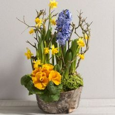 Confiture, Composition en hauteur jaune et bleue avec plantes à bulbe dans sa coupe. Catalogue Interflora, a retrouver sur www.wikifleurs.com