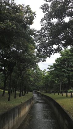 Parque Norte Sul - Campinas,SP - Brazil Brazil Travel, South America, Country Roads, City, Beach, Travelling, Photographs, Wallpapers, Inspiration
