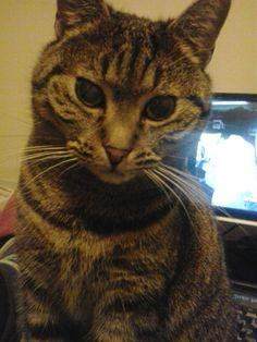 la mia super gatta Muci