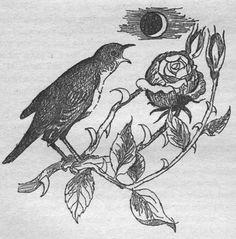 nightingale and the rose oscar wilde