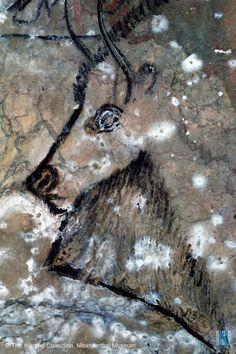 Niaux - Grotte de Niaux Cave Art and History Art Pariétal, Paleolithic Art, Art Premier, Aboriginal Art, Ancient Artifacts, Ancient Aliens, Rock Art, Archaeology, Painted Rocks