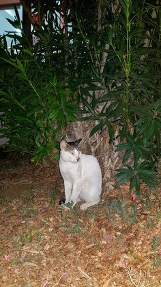 Wild Cat Cyprus