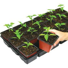Seed Starter with 18 Deep Pots Planting Vegetables, Planting Seeds, Backyard Vegetable Gardens, Garden Plants, Organic Gardening, Gardening Tips, When To Plant Seeds, Seed Starting, Cool Plants