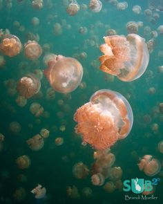 golden-jellyfish-159.jpg (960×1200)