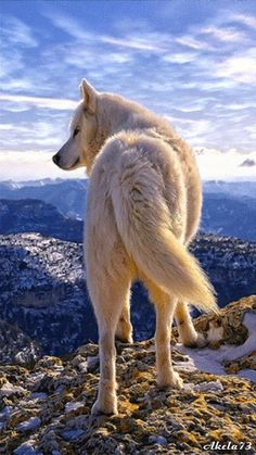 Journey/ Female/ Adult/ made the journey to the top of Polar mountain/ She is proud of her goal, and denied that it was impossible/ She found that it would be possible to live on the mountain, but would be very hard/ no mate/ from the first litter of Tundra and Everest