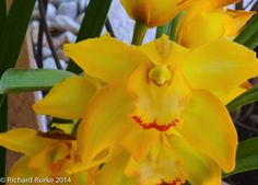 Today's Post on Imagery Photography...Yellow Yellow Yellow