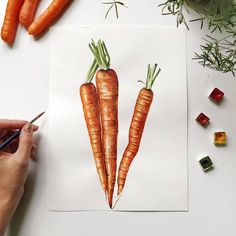 Botany, Biology, Carrots, Illustrations, Watercolor, Vegetables, Pen And Wash, Watercolor Painting, Illustration