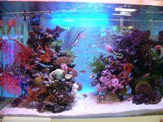 Aquarium produced by TokyoAquagarden