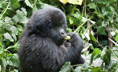 Kenia Monkey, Africa, Animals, Kenya, Animales, Jumpsuit, Animaux, Monkeys, Animal