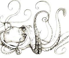 Ilustracion Pulpo