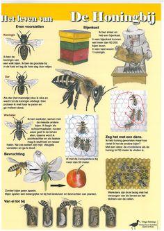 Kaart Het leven van de honingbij