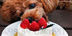 Receitas para cachorro - Bolo de sorvete para cachorro