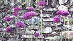 Garden Design Images, Gardens, Plants, Garden, Plant, Garden Types, Yards, Planting, Planets