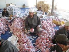 名産であるザクロを加工する労働者 Afghan pomegranate processing ◆アフガニスタン - Wikipedia http://ja.wikipedia.org/wiki/%E3%82%A2%E3%83%95%E3%82%AC%E3%83%8B%E3%82%B9%E3%82%BF%E3%83%B3 #Afghanistan