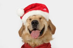 Happy dog in a Santa hat. / You can Add Santa to Your photos. Try it out for Free at Capturethemagic.com