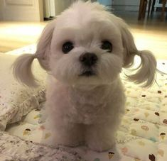 Super dogs cutest little dogs cutest Ideas - Dog! Super dogs cutest little dogs cutest Ideas - Dog! Baby Animals Super Cute, Cute Little Dogs, Cute Little Animals, Super Cute Dogs, Cute Dogs And Puppies, Baby Dogs, Pet Dogs, Funny Puppies, Puppies Tips