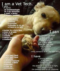 Actually ItS Easier To List What A Vet Tech CanT Do Rather
