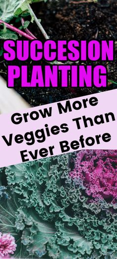 Succession planting is one simple gardening trick that you can use to grow more veggies than ever before. Learn how to use succession planting in your garden and get started this spring! #VeggieGardening #SpringGardening