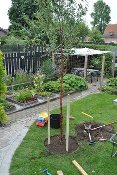 I Tages trädgård: köksträdgården