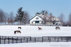 TITLE: Horses in the Snow #2  ABOUT This photograph was taken in winter of 2015 while looking for the perfect Kentucky snow scenery. I went to my favorite location - Dixiana farm, and I was not disappointed. Heavy snow covered meadows and galloping team of horses were waiting for me. Later on, curious about my camera, they came down and made friends with me. It is amazing feeling being surrounded by 5 horses eager to be scratched on the head. PRINT Offered here is a print on Kodak Endura…