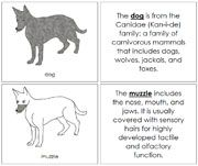 Dog Nomenclature Book