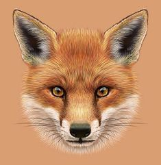 Picture of Illustrative Portrait of a Red Fox. The cute fluffy face of forest Fox. stock photo, images and stock photography. Fox Stock, Fennec, Baby Sketch, Fox Images, Fox Drawing, Felt Fox, Fox Face, Fox Head, Cute Fox