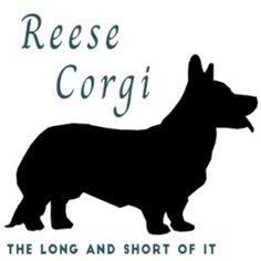 Welcome - Reese Corgi Dog Show, Rose Design, Corgi, Corgis