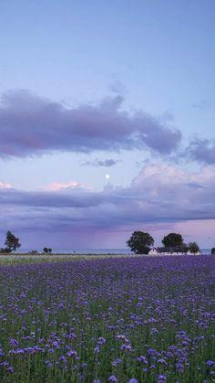 Spring Aesthetic, Nature Aesthetic, Flower Aesthetic, Aesthetic Backgrounds, Aesthetic Iphone Wallpaper, Aesthetic Wallpapers, Lavender Aesthetic, Purple Aesthetic, Scenery Wallpaper
