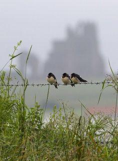 ɑʋɛɾџ'ʂ  ɑʋɨɑɾџ #aviary #bird