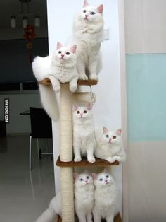 Adorable tower of #cats