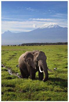 Mt. Kilimanjaro - Tanzania elephant