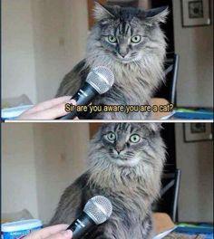 Trafodaki kedi caps'leri! foto galerisi