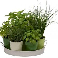 Plateau 7 herbes aromatiques FLOREX - Pot, bac, jardinière