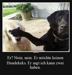 jpg von Edith auf www. Funny Dog Photos, Funny Dogs, Cute Dogs, Facebook Humor, Animals And Pets, Funny Animals, Cute Animals, Image Facebook, Cool Pictures