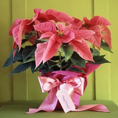 All Wrapped Up ~~ A pink paper wrap and satin bow quickly turn a potted poinsettia into a take-along gift for a holiday party. Choose an art paper that is thin enough to fold easily around the pot.