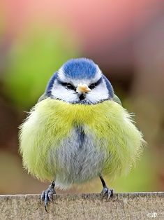 Kinds Of Birds, All Birds, Cute Birds, Pretty Birds, Little Birds, Beautiful Birds, Animals Beautiful, Angry Birds, Exotic Birds