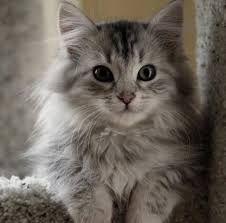 Resultado de imagen para cute kitty cat