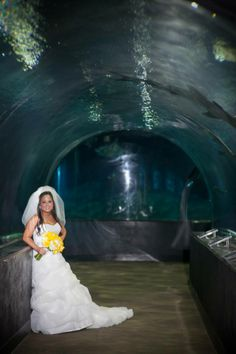 Shark tunnel wedding oklahoma aquarium weddings by our for Shark tank wedding dress