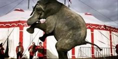 petition: Free Ramboline the lonely elephant