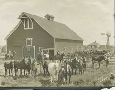 Horses and mules on the Johnson ranch, Haskell County, Kansas Prime horse and mule power is displayed on the Johnson ranch in northern Haskell County, Kansas, 1912. Also visible in the photograph are the ranch house, a barn, corrals, and a windmill.