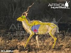 Image result for african+game+bow+kill+shot+placement