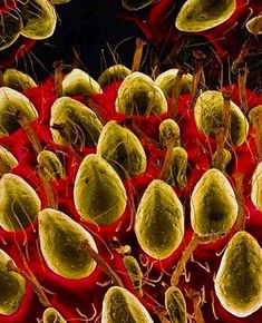 Strawberries Under The Microscope.....  Interesting  hm  >8)))