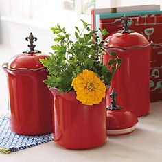 Cinnabar Canisters--Beautiful and useful if you need a little prop of color in your kitchen!
