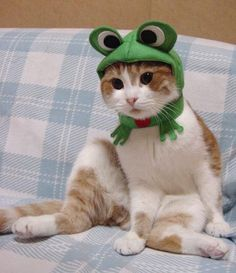 cat frog costume.  love the big eyes (http://www.petoffice.co.jp/catprin/english/)