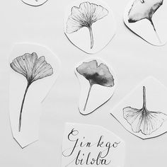 Work in progress Ginkgo biloba  #draw #drawings #art #artsy #ginko #ginkgo…