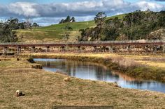 Opua and Surrounds - CAMERA CLIPS PHOTOGRAPHY