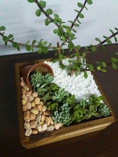If there's one fast growing trend in plant arrangements, it's the world of ideas for succulent garden. Check out the best outdoor design ideas # succulent Gardening 15 Awesome Succulent Garden Ideas for Uniqueness in Your Garden Cactus Terrarium, House Plants Decor, Plant Decor, Succulent Gardening, Container Gardening, Flower Gardening, Indoor Gardening, Gardening Tips, Succulent Planters