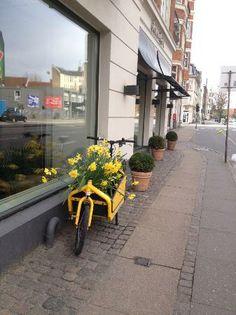 Avenue Hotel Copenhagen (Frederiksberg, Danmark) - Hotel - anmeldelser og bedømmelser - TripAdvisor