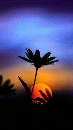 beautiful sunset New Sunset Silhouette Art Painting Beautiful Ideas Landscape Photography Tips, Sunset Photography, Amazing Photography, Photography Lighting, Photography Tutorials, Lightning Photography, Photography Reviews, Photography Settings, Photography Composition